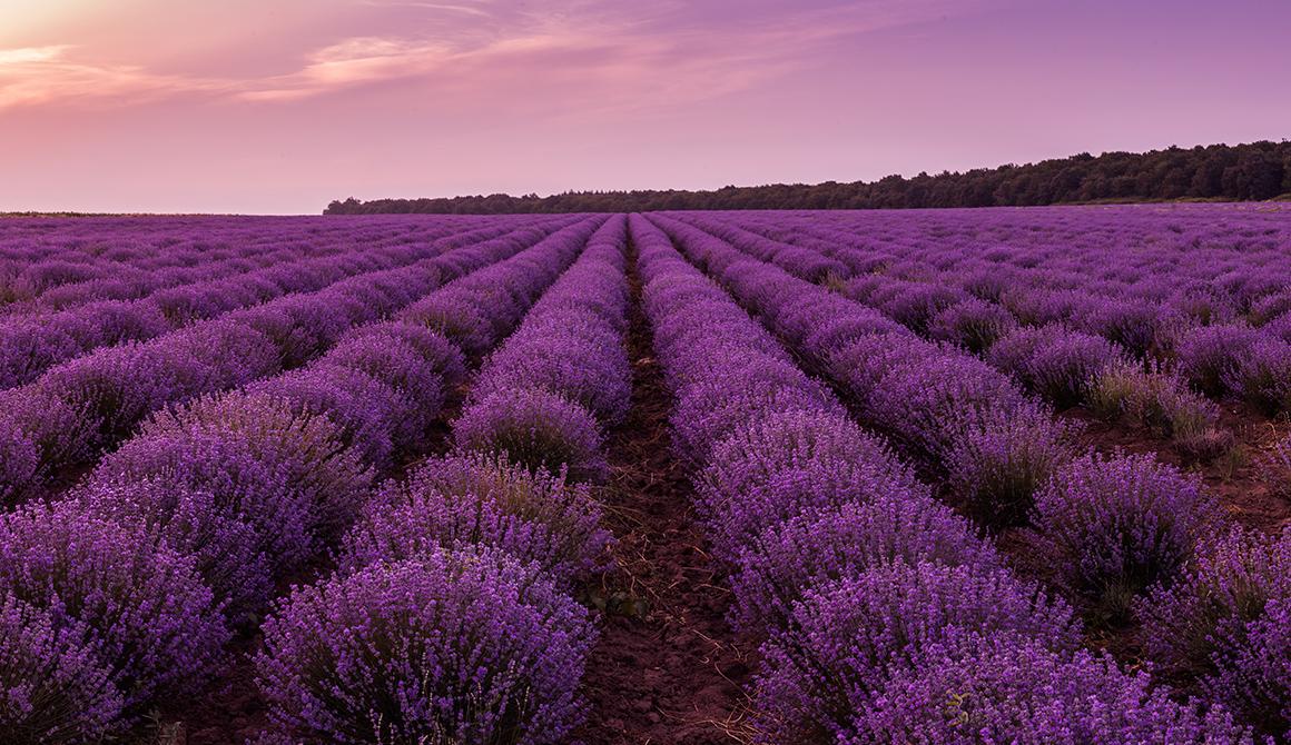 Purple Violet Color